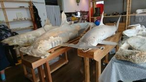 【画像】サメ