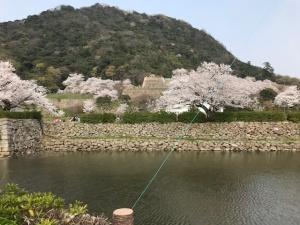 【画像】久松公園の桜2