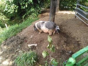 【画像】エジラムの豚小屋