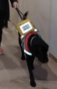 【画像】盲導犬